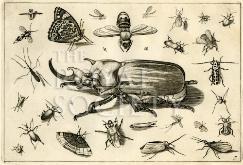 image hoefnagel d i_diversae insectarum_plate 7