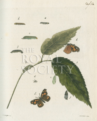 image fuessly_archiv der insect_plate 14