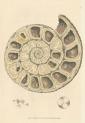 image sowerby j_mineralogy v1_1804_plate 12