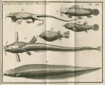 image Linnaeus, C_Amoenitates academicae_vol 1, 1744_tab 14