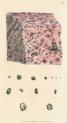 image sowerby j_mineralogy v1_1804_plate 79