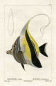 image cuvier g_histoire_poissons_plate 177
